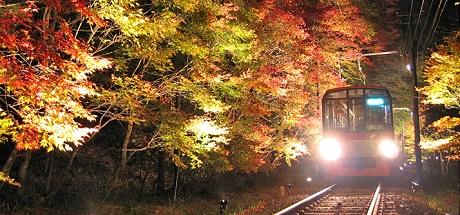 もみじのトンネル 夜.jpg
