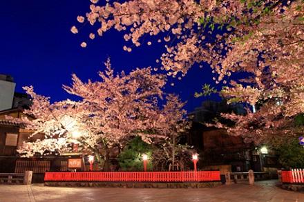 祇園 桜.jpg