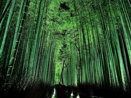 嵐山 花灯路 竹林の小径